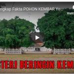 Mengungkap Fakta POHON KEMBAR Yogyakarta Yang Menjadi Misteri