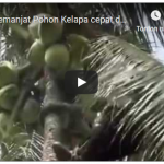 Alat Bantu Memanjat Pohon Kelapa