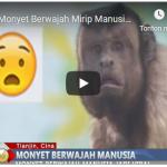 Gempar Seekor Monyet Berwajah Mirip Manusia di Kebun Binatang China
