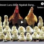 Video Hewan Lucu Bikin Ngakak Banget