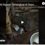 Babi Ngepet Tertangkap Warga Setelah Di Intai